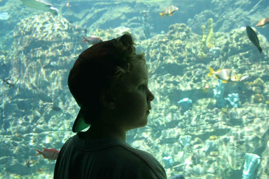 Ethan Aquarium SeaWorld