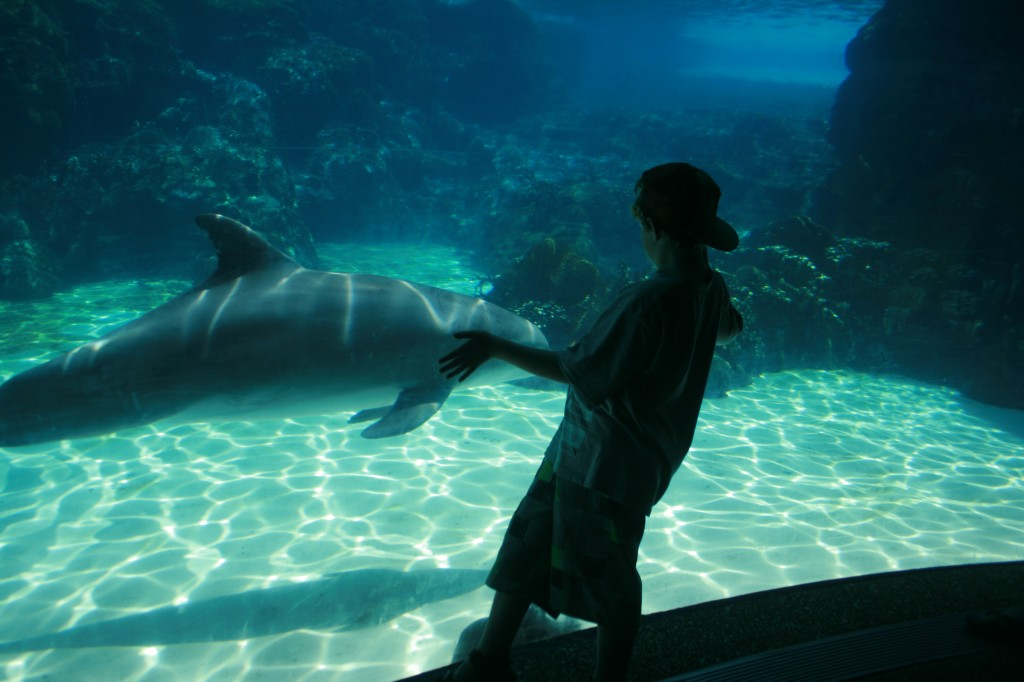 Ethan and Dolphin