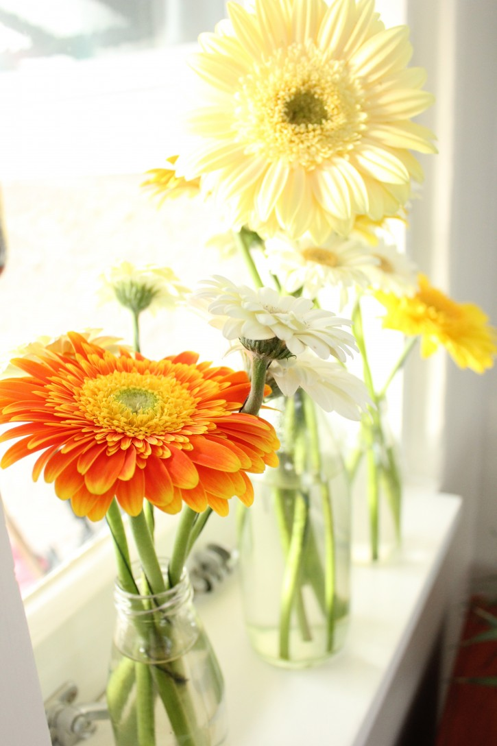 Gerberas_on_window_sill