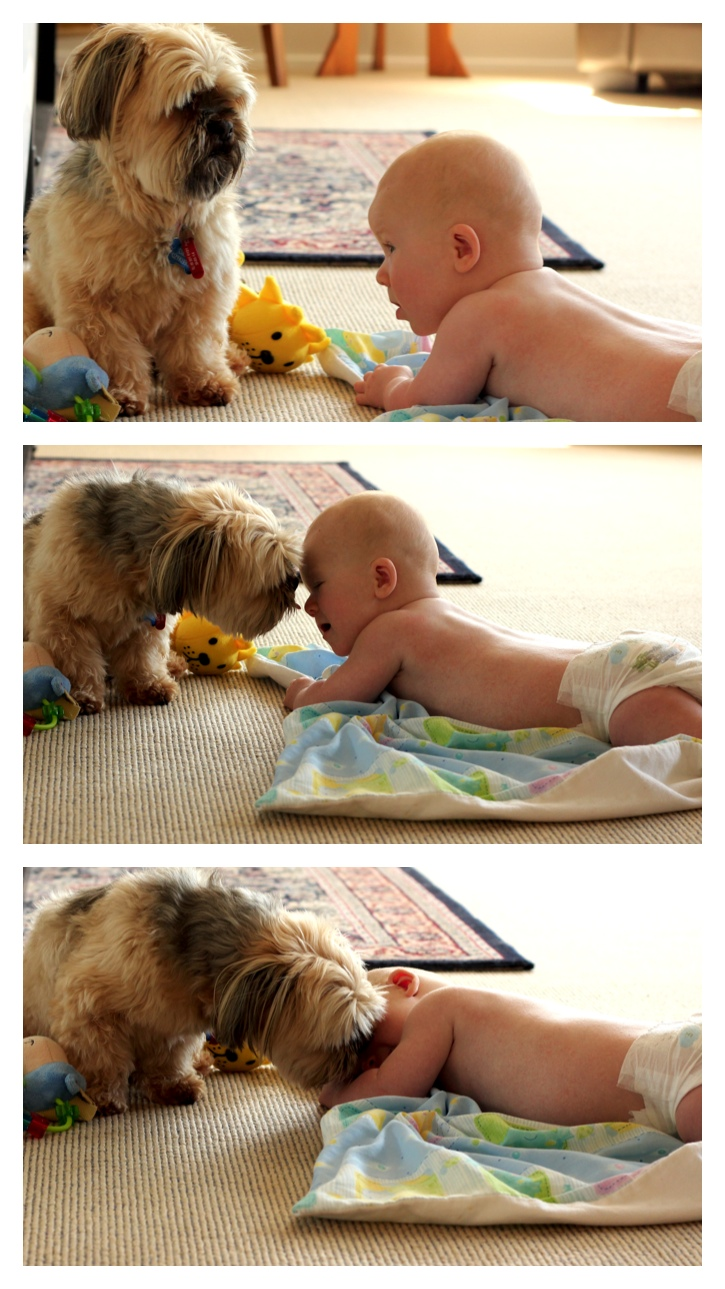 Dog kisses baby