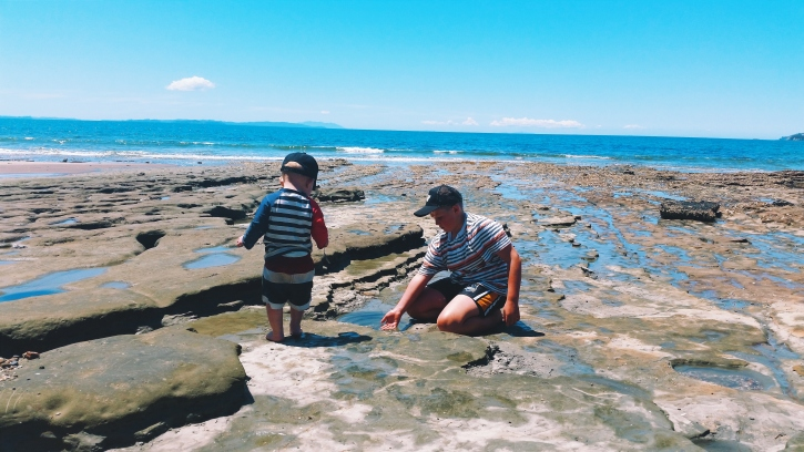 NZ Summer Rockpooling