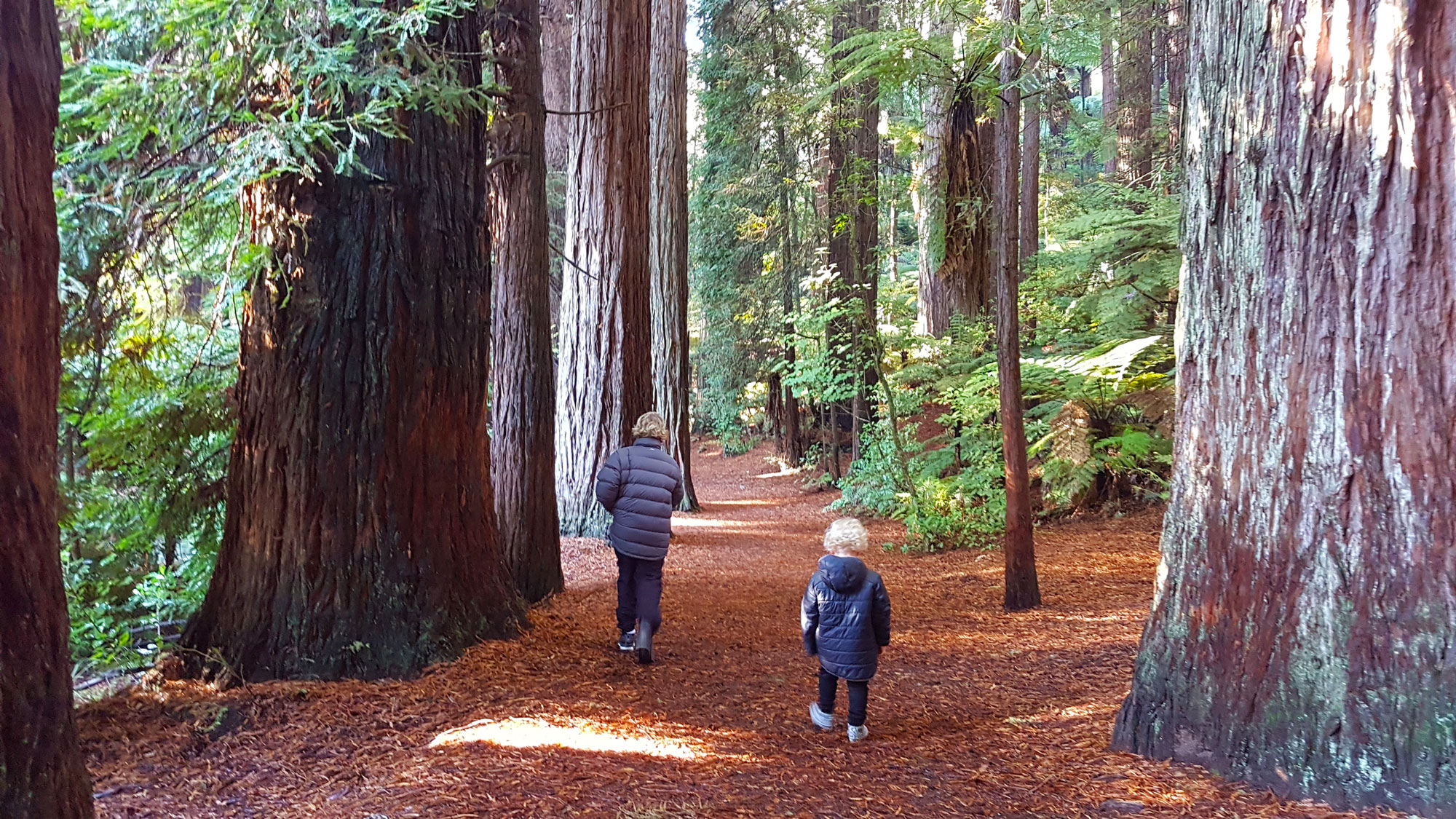 New Zealand's Top Mummy Blogger Parenting Rotorua Travel Blog Redwoods